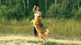 Τα άλματα σκυλιών πίσω από ένα ραβδί απόθεμα βίντεο