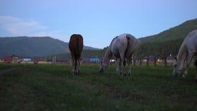 Τα άλογα βόσκουν σε ένα λιβάδι κοντά στο χωριό φιλμ μικρού μήκους
