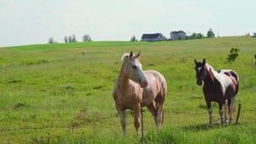 Τα άλογα βόσκουν σε ένα λιβάδι απόθεμα βίντεο