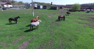 Τα άλογα βόσκουν σε ένα μικρό αγρόκτημα απόθεμα βίντεο