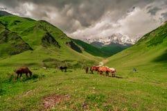Τα άλογα βόσκουν στοκ εικόνες με δικαίωμα ελεύθερης χρήσης