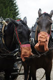 Τα άλογα εργασίας τρώνε Στοκ Εικόνα