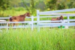 Τα άλογα θαμπάδων στο υπόβαθρο και οι χλόες με το πρωί δροσίζουν στο πρώτο πλάνο, πράσινο λιβάδι για τα άλογα με έναν σταύλο στοκ εικόνα με δικαίωμα ελεύθερης χρήσης