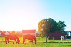 Τα άλογα στο αγρόκτημα Στοκ Εικόνες