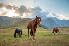 Τα άλογα στο λιβάδι και τοποθετούν Kazbek στο υπόβαθρο Στοκ Φωτογραφία