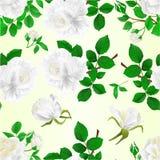 Τα άνευ ραφής άσπρα τριαντάφυλλα σύστασης με τον τρύγο οφθαλμών και φύλλων σε ένα άσπρο υπόβαθρο θέτουν την πρώτη διανυσματική απ Στοκ Φωτογραφίες