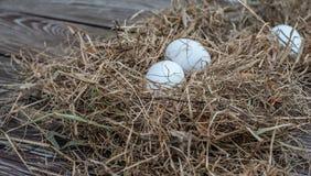 Τα άσπρα αυγά βάζουν στον ξηρό σανό στον ξύλινο ηλικίας πίνακα στοκ φωτογραφία