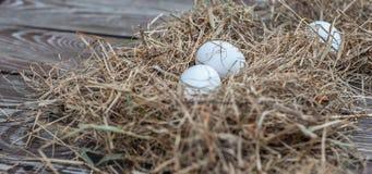 Τα άσπρα αυγά βάζουν στον ξηρό σανό στον ξύλινο ηλικίας πίνακα στοκ εικόνα με δικαίωμα ελεύθερης χρήσης
