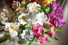 Τα άσπρα, ρόδινα και πορφυρά λουλούδια κρίνων στη θολωμένη κινηματογράφηση σε πρώτο πλάνο υποβάθρου, μαλακοί κρίνοι εστίασης ανθί στοκ φωτογραφία