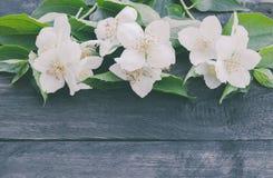 Τα άσπρα jasmine λουλούδια και τα πράσινα φύλλα βρίσκονται σε ένα ξύλινο υπόβαθρο r στοκ φωτογραφία με δικαίωμα ελεύθερης χρήσης