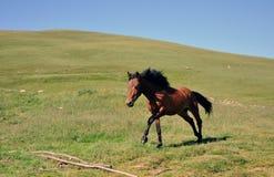 τα άλογα αλόγων λουριών συναγωνίζονται τη στρογγυλοποίηση της στροφής τρία Στοκ Φωτογραφία