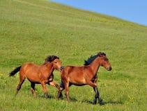 τα άλογα αλόγων λουριών συναγωνίζονται τη στρογγυλοποίηση της στροφής τρία Στοκ φωτογραφία με δικαίωμα ελεύθερης χρήσης