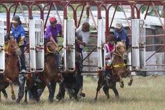 τα άλογα αλόγων λουριών συναγωνίζονται τη στρογγυλοποίηση της στροφής τρία Στοκ Φωτογραφίες
