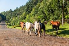 Τα άλογα καλλωπίζουν το δρόμο επαρχίας περπατήματος Στοκ φωτογραφία με δικαίωμα ελεύθερης χρήσης