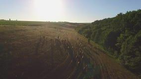Τα άλογα κινούνται στην αργός-Mo απόθεμα βίντεο