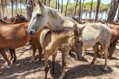 Τα άλογα κοπαδιών σε στάση συγκεντρώνουν μετά από το βάπτισμα Στοκ εικόνα με δικαίωμα ελεύθερης χρήσης