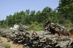 Τα άλογα φέρνουν τα ξύλα περικοπών στο δάσος Στοκ Εικόνες
