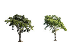 τα δέντρα απομονώνουν Στοκ εικόνες με δικαίωμα ελεύθερης χρήσης