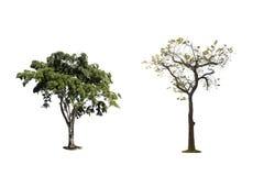 τα δέντρα απομονώνουν Στοκ Εικόνες