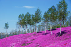 Τα δέντρα αυξάνονται στο ρόδινο τάπητα στοκ φωτογραφία