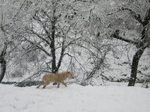 Τα δέντρα είναι άσπρα λόγω του χιονιού Στοκ εικόνα με δικαίωμα ελεύθερης χρήσης