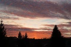 Τα δέντρα ηλιοβασιλέματος σκιαγραφούν το κομψό πεύκο Στοκ Εικόνα
