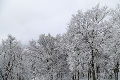 Τα δέντρα κάτω από χιονισμένο πάνω από το χιονοδρομικό κέντρο βουνών Στοκ Φωτογραφία