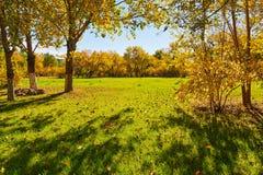 Τα δέντρα και ο χορτοτάπητας Στοκ εικόνα με δικαίωμα ελεύθερης χρήσης