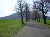 Τα δέντρα κατά μήκος του δρόμου στο τσεχικό βουνό σχίζουν Στοκ εικόνες με δικαίωμα ελεύθερης χρήσης