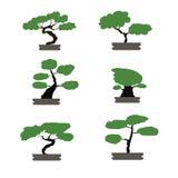 Τα δέντρα μπονσάι το ιαπωνικό ύφος που απομονώνεται καθορισμένα Στοκ Εικόνα