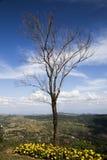 Τα δέντρα, που περιμένουν την αναζοωγόνηση στη ζωή, κάθε ζωή Στοκ Εικόνες