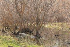 Τα δέντρα που στέκονται στο νερό Στοκ εικόνα με δικαίωμα ελεύθερης χρήσης