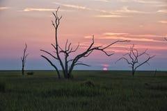 Τα δέντρα σκελετών Στοκ Φωτογραφίες