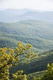Τα δέντρα στα βουνά Στοκ Εικόνες