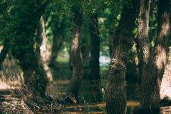 Τα δέντρα στον τρύγο νερού κοιτάζουν Στοκ εικόνα με δικαίωμα ελεύθερης χρήσης
