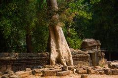 Τα δέντρα στους τοίχους ναών prohm TA anglicanism Καμπότζη Στοκ φωτογραφίες με δικαίωμα ελεύθερης χρήσης