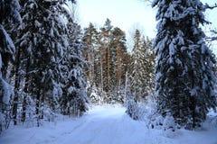 Τα δέντρα στο δάσος που καλύπτεται με το χιόνι Στοκ εικόνα με δικαίωμα ελεύθερης χρήσης