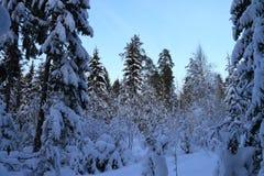 Τα δέντρα στο δάσος που καλύπτεται με το χιόνι Στοκ Εικόνα