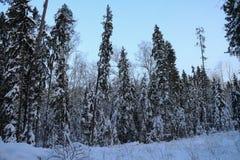 Τα δέντρα στο δάσος που καλύπτεται με το χιόνι Στοκ Φωτογραφίες