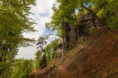 Τα δέντρα στο δάσος Στοκ εικόνες με δικαίωμα ελεύθερης χρήσης