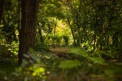 Τα δέντρα στο πάρκο Στοκ Φωτογραφίες