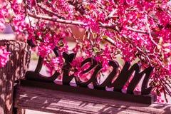 Τα δέντρα της Apple καβουριών ανθίζουν την άνοιξη Στοκ φωτογραφία με δικαίωμα ελεύθερης χρήσης