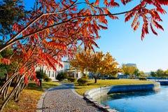 Τα δέντρα φανών φθινοπώρου στοκ φωτογραφίες με δικαίωμα ελεύθερης χρήσης