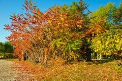 Τα δέντρα φανών Στοκ φωτογραφίες με δικαίωμα ελεύθερης χρήσης