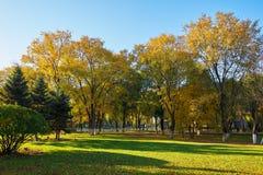 Τα δέντρα φθινοπώρου στην ανατολή χορτοταπήτων Στοκ Εικόνες