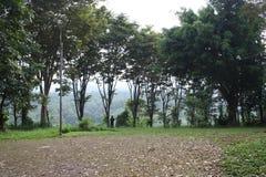 Τα δέντρα φυλάκων στοκ φωτογραφία με δικαίωμα ελεύθερης χρήσης