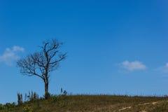 Τα δέντρα φύλλων διαδρομής Στοκ εικόνες με δικαίωμα ελεύθερης χρήσης