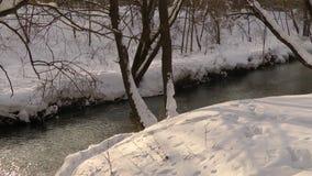 Τα αγριόχηνα ψάχνουν τα τρόφιμα στο χειμερινό ποταμό χιονιού απόθεμα βίντεο