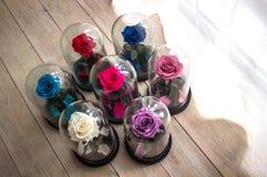 Τα αιώνια τριαντάφυλλα στη φιάλη στοκ φωτογραφίες με δικαίωμα ελεύθερης χρήσης
