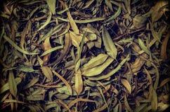 Τα αναδρομικά φύλλα ευκαλύπτων ξεραίνουν επάνω για το υπόβαθρο Στοκ Εικόνες